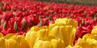 Как сохранить цветы?